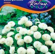 Seminte flori Banutei (Bellis perenis) albi 0,20g