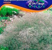 Seminte flori Floarea Miresei (Gypsophila paniculata) alba 0,50g