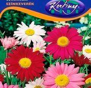 Seminte flori Margarete (Chrysanthemum coccineum) amestec de culori 0,50g