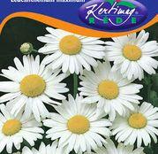 Seminte flori Margarete (Leucanthemum maximum) albe 0.50g