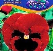 Seminte flori Panselute (Viola x witrockiana) bordo 0.25g