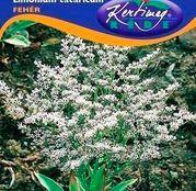 Seminte flori Saraturica perena (Limonium tataricum) alba 0,2g