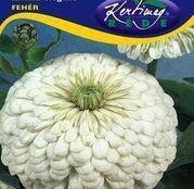 Seminte flori Carciumarese (Zinnia elegans) albe 2g