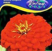 Seminte flori Carciumarese (Zinnia elegans) rosii 1g