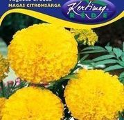 Seminte flori Craite inalte (Tagetes erecta) Galbene 1g