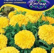 Seminte flori Craite pitice (Tagetes erecta) Galbene 1g