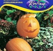 Seminte Dovlecel Ghostrider / Halloween (Cucurbita pepo) 2g