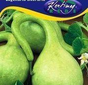 Seminte Dovlecel verde deschis (Lagenaria siceraria) 2g