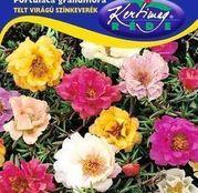 Seminte Flori de piatra semi-involte/duble (Portulaca grandiflora) 0,5g batute