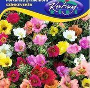 Seminte Flori de piatra involte/simple (Portulaca grandiflora) 0,5g