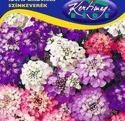 Seminte flori Lilicele (Iberis umbelata)