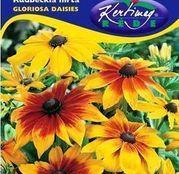Seminte flori Rudbeckia (Rudbeckia hirta) Gloriosa Daisies 0.5g