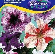 Seminte flori Petunii cu flori mari (Petunia hybrida superbissima) amestec de culori 0,125g