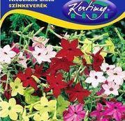 Seminte flori Regina Noptii (Nicotiana alata) amestec de culori 0.25g