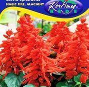 Seminte flori Salvia (Salvia splendens) Magic fire - rosu pitic 0,5g