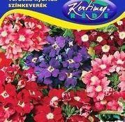 Seminte flori Urzicute (Verbena hybrida) amestec de culori