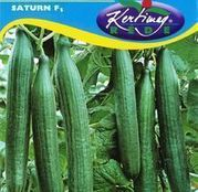 Seminte castraveti Saturn F1 10 seminte