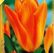 Bulbi de flori Lalele Orange Emperor 10 buc