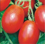 Seminte tomate Missouri (10 g, 50 g)