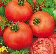 Seminte tomate (rosii) Medina F1 (5 g)