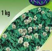 Seminte Trifoi Alb (Trifolium repens L.) (100g, 500g, 1 kg, 25kg)