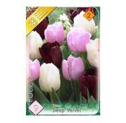 Bulbi de flori LaleleTrio Deep Velvet 9buc