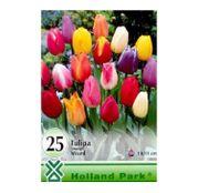 Bulbi de flori Lalea Triumph Mixed (10buc, 25buc)