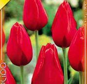 Bulbi de flori Lalea Kingsblood 10buc