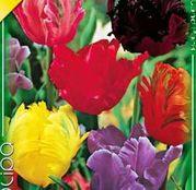 Bulbi de flori Lalea Parrot Mixed 10buc