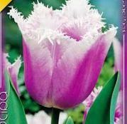 Bulbi de flori Lalea Fringed Canova 8buc