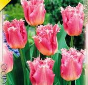 Bulbi de flori Lalea Fringed Fancy Frills 10buc