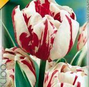 Bulbi de flori Lalea Carneval de Nice 10buc