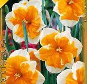 Bulbi de flori Narcisa Orangery 5buc