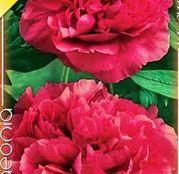Bulbi de flori Bujori Paeonia Rosii 1 buc