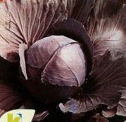 Seminte Varza rosie Roodkop 10 g
