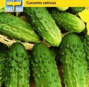 Seminte Castraveti de toamna Vert Petit de Paris 3g